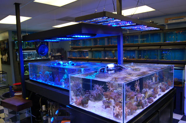 The fish bowl more aquarium products custom aquariums for Salt water fish store